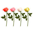 set of beautiful realistic rose vector image