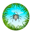 spider hanging on the web vector image vector image