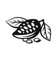 cocoa fruits on branch logo vector image vector image