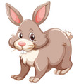 gray rabbin with happy face vector image vector image