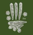 okra hand draw sketch vegetable vector image vector image