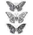 decorative sketch butterflies vector image vector image