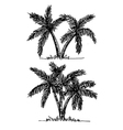 palm tree Tropical palm trees black silhouettes b vector image vector image