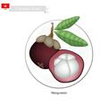 Purple Mangosteens A Famous Fruit in Vietnam vector image vector image
