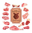 sketch colorful meat elements collection vector image vector image
