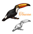 toucan sketch exotic bird icon vector image vector image