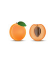apricot fruit whole and a half vector image