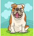 english bulldog dog cartoon vector image vector image
