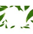 green fresh spring flying tree leaves over white vector image vector image