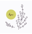 Hand drawn thyme branch with leves isolated on vector image
