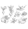 sketches of organic vegetables farm vegetarian vector image vector image