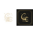 zodiac scorpio horoscope sign line art silhouette vector image