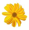 A single daisy flower vector image