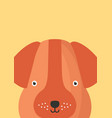 cute dog snout flat adorable vector image vector image