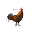 hand drawn rooster isolated engraved style vector image