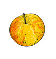 hand drawn sketch apple in color isolated on vector image vector image