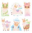 no drama llama funny llamas or cute alpacas quote vector image vector image