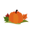 pumpkin leaves fall decoration thanksgiving vector image