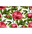 Seamless pattern with peony flowers vector image vector image