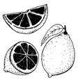 set hand drawn lemons isolated on white vector image