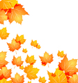 Autumn background with flying maples vector image vector image