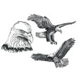 eagle bird sketch icon set vector image