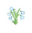 gentle snowdrops on a white background vector image vector image