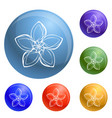 lily exotic flower icons set vector image