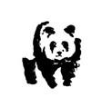 bear panda brush absract vector image
