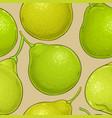 bergamot fruit pattern on color background vector image vector image