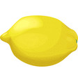 fresh lemon isolated on white vector image vector image
