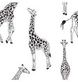 giraffe seamless black white pattern african vector image vector image