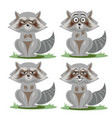 raccoon collection with different emotions vector image
