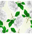 seamless texture rose white flower and leaves vector image vector image