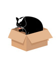 cute big cat licking a paw in a small cardboard vector image vector image