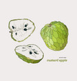 sugar-apple hand drawn set vector image