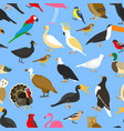 big set tropical domestic and other birds vector image vector image