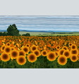 bright field of sunflowers with bushes trees and vector image