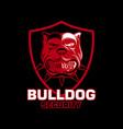 bulldogs logo design template vector image vector image