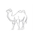 camel lines vector image