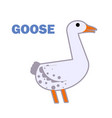 domestic bird goose isolated vector image vector image