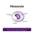 The anatomical structure of monocytes Blood cells vector image vector image