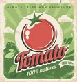 Vintage tomato poster vector image vector image