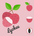 lychee vector image vector image