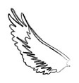 bird wing feathers dove animal vector image vector image