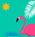 cartoon pink flamingo colored background vector image vector image