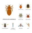 human skin parasites housing pests insects vector image