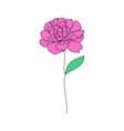 peony flower on white vector image