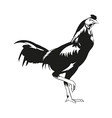 Thai fighting cock vector image vector image