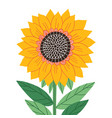 beautiful abstract sunflower isolated vector image vector image